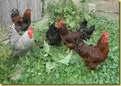 farm pictures 006